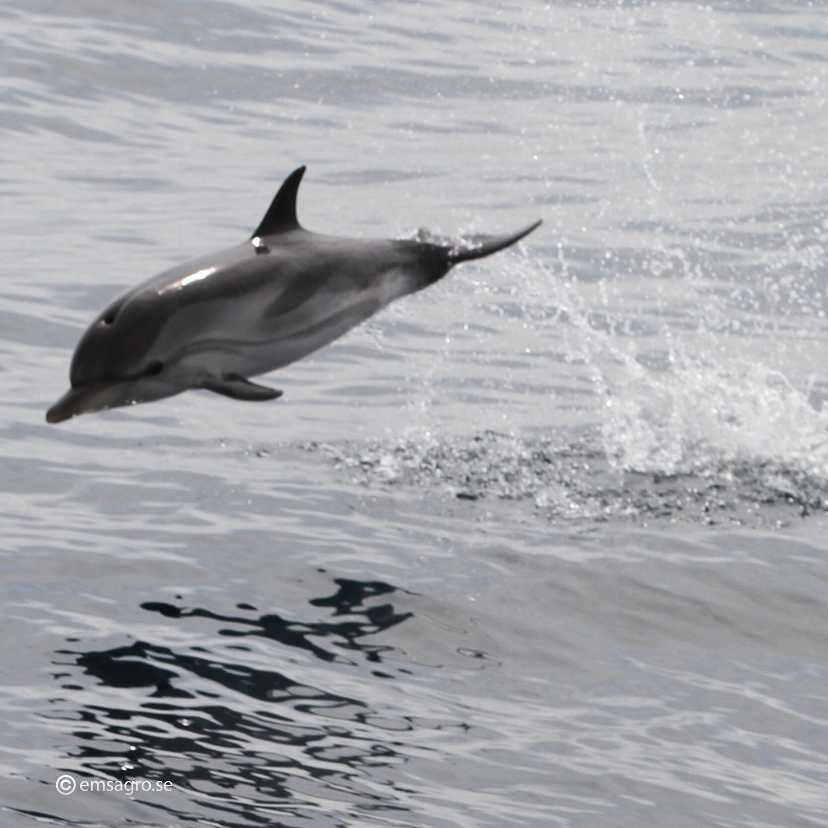 Astondoa 46 Emsagro delfin
